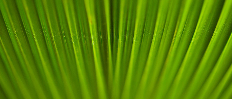 Lähikuva kasvin vihreistä lehdistä
